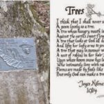 The Best A Tree Is A Tree Poem Pics059