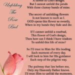 The Best Beautiful Rose Poems Photo801