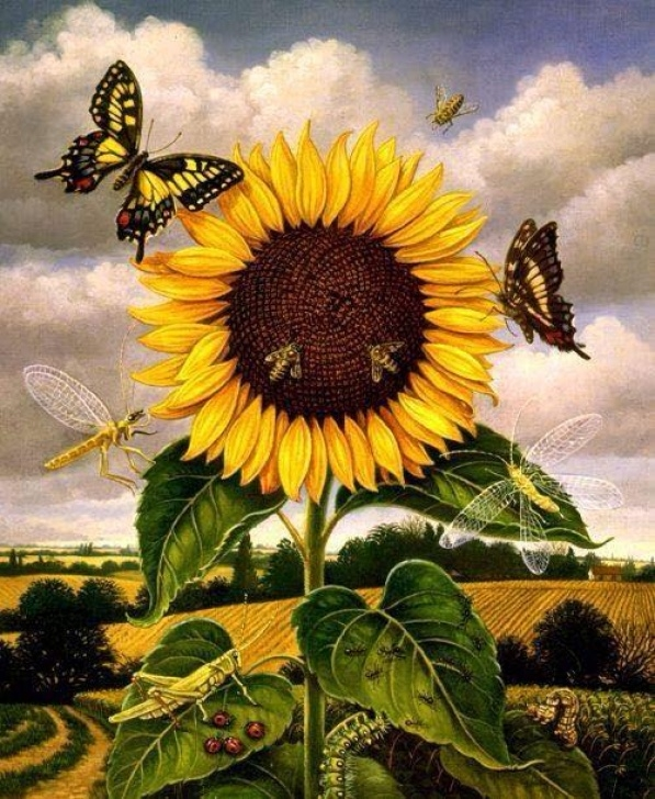 The Best Blake Ah Sunflower Picture385