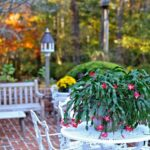 The Best Christmas Cactus Poem Image714