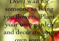 The Best Plant Your Own Garden And Decorate Your Own Soul Pic894