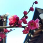The Best Plum Blossom Poem Pics499