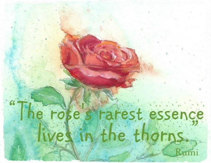 The Best Poems About Roses And Thorns Picture372