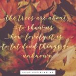 The Best The Falling Flower Poem Image226