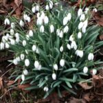 The Best To A Snowdrop By William Wordsworth Pics833