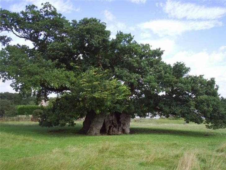 The Best Under The Old Oak Tree Poem Picture885