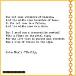 The Best White Rose Poetry Photo552