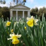 The Best William Blake Daffodils Photo392