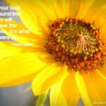 The Best You Are My Sunflower Poem Pics391