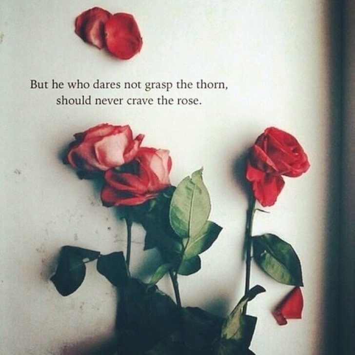 Top Dead Roses Poem Picture666