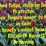 Top Famous Poems About Tulips Pics675
