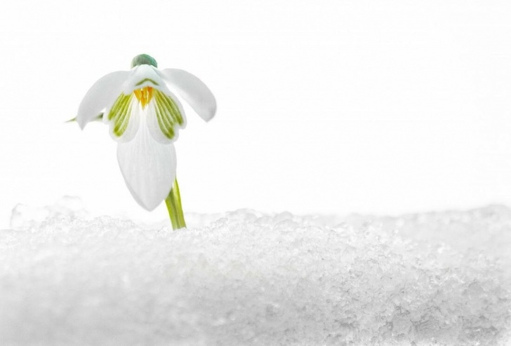 Top Famous Snowdrop Poems Pic538