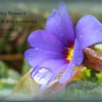 Top Haiku About Flowers Image793
