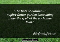 Top Hyacinths To Feed The Soul Poem Image164