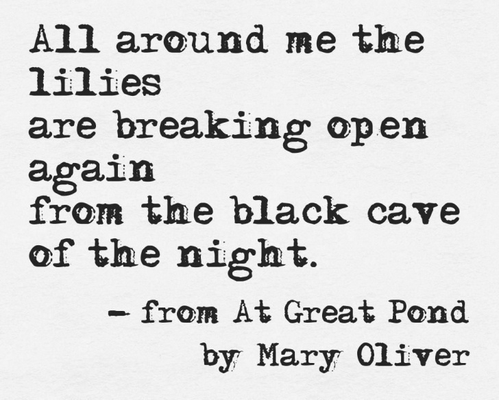 Top Mary Oliver The Gardener Photo157