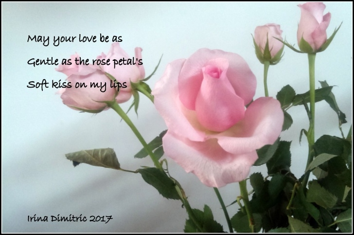Top Poem About Rose Flower Photo307
