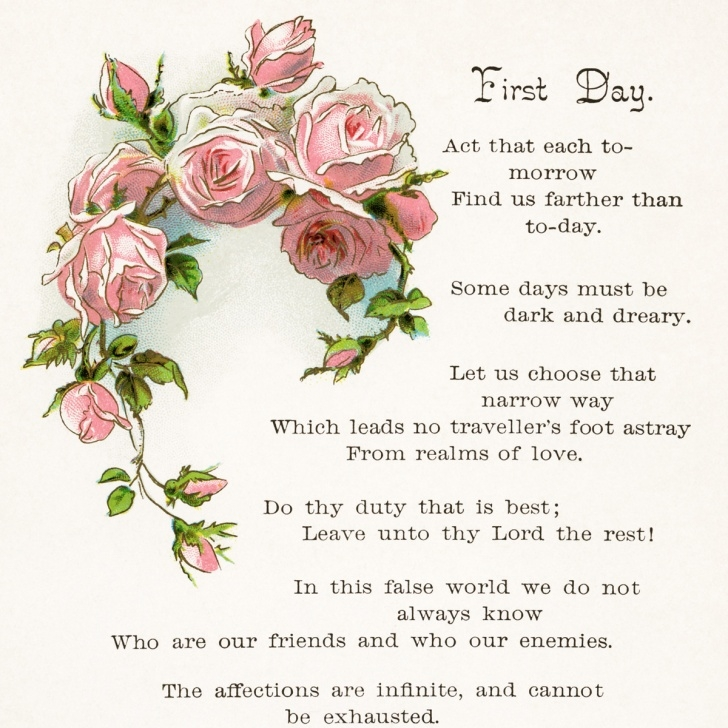 Top Poem On Flower Rose Pics264