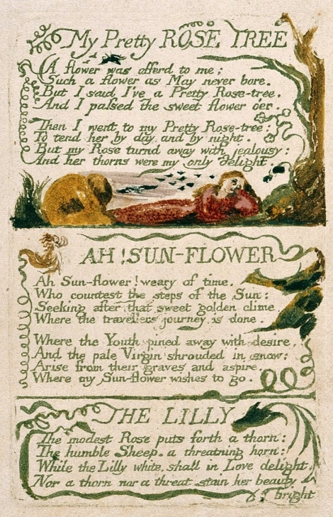 Top Poem On Lily Flower In English Pic829