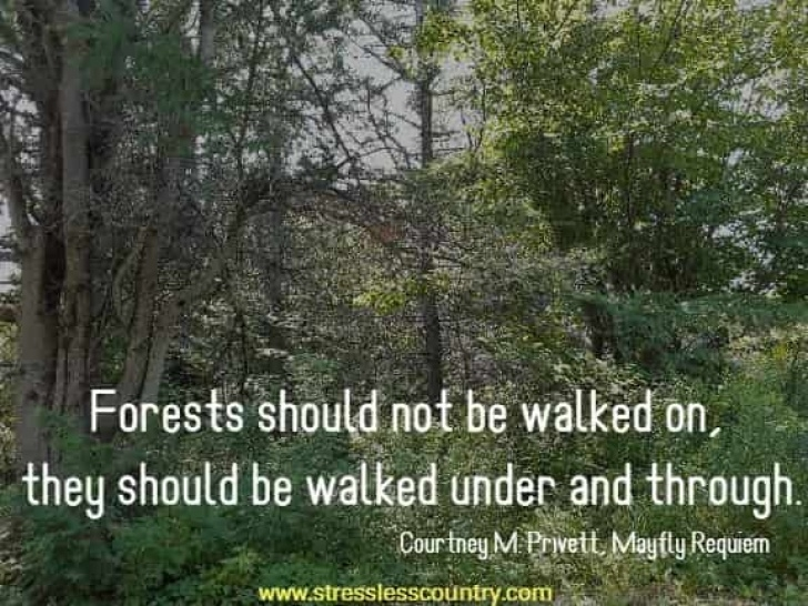 Top Poems About Conservation Of Trees Picture466