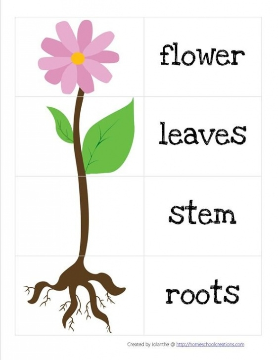 Top Poems About Flowers For Kindergarten Picture223