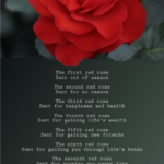 Top Red Rose Poem Photo067