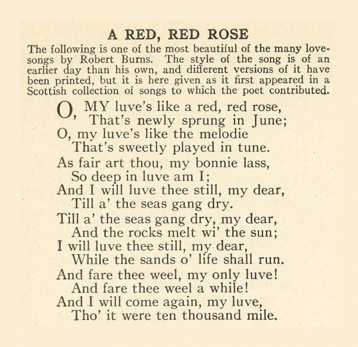 Top Rose Rose Poem Pic057