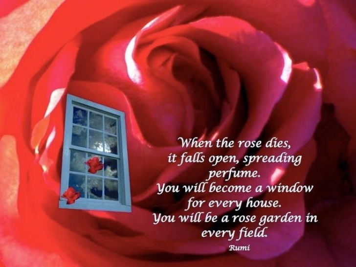 Top Rumi Rose Poem Pic924
