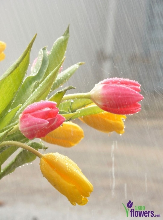 Top Spring Showers Poem Picture340