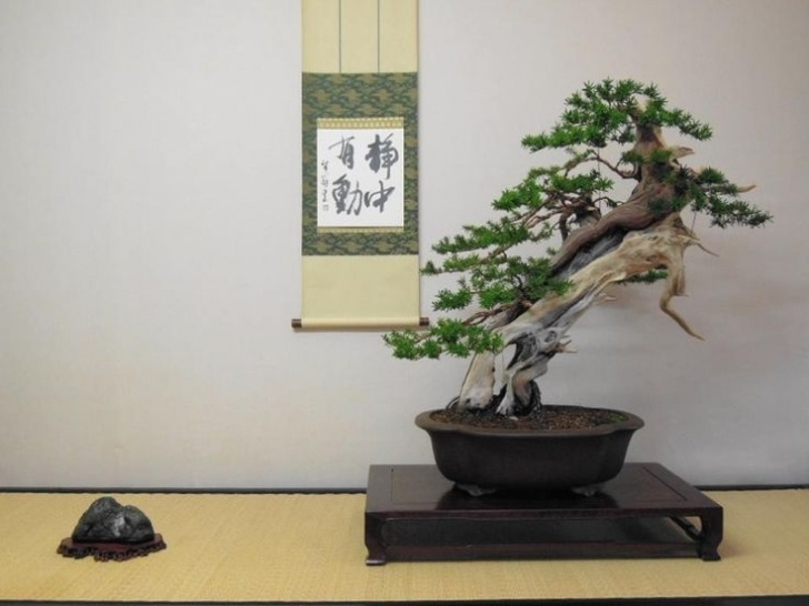Top The Bonsai Tree Poem Photo932