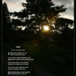 Top Tree Of Poem Picture536