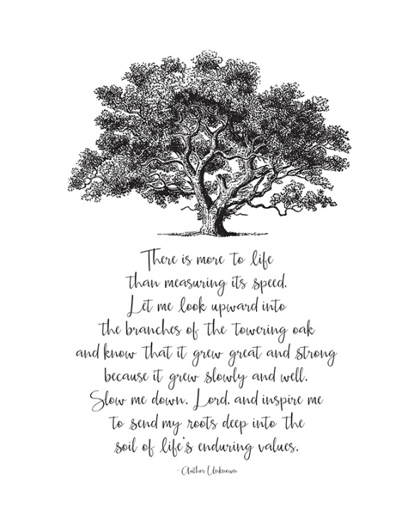 Top Trees Trees Trees Poem Photo570