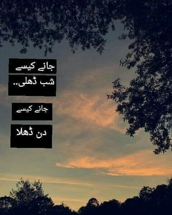 Top Urdu Poetry About Trees Image331